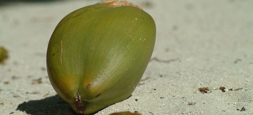 kokos kokoswasser